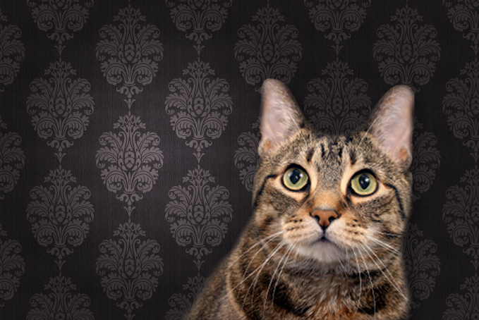 Cat against a brown pattern wallpaper background