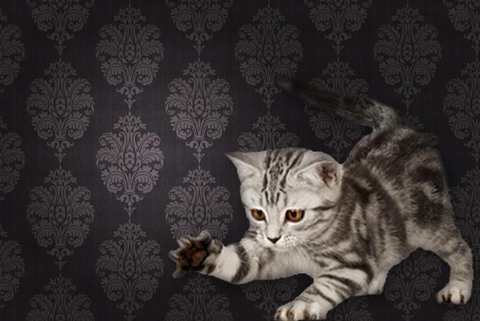 Kitten against a brown pattern wallpaper background