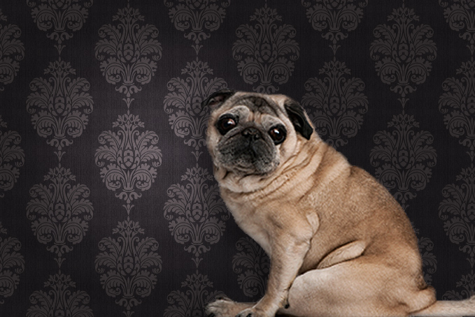 Pug dog against a brown pattern wallpaper background