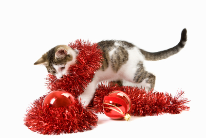 Kitten wrapped in red tinsel with baubles in front