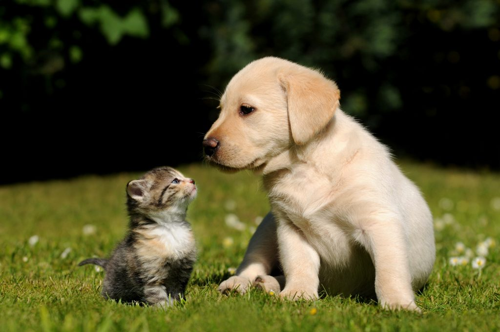 kitten and puppy outside