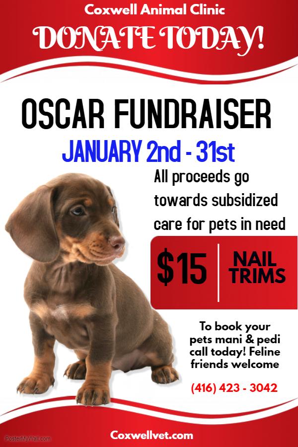 OSCAR Fundraiser January poster from Coxwell Animal Clinic