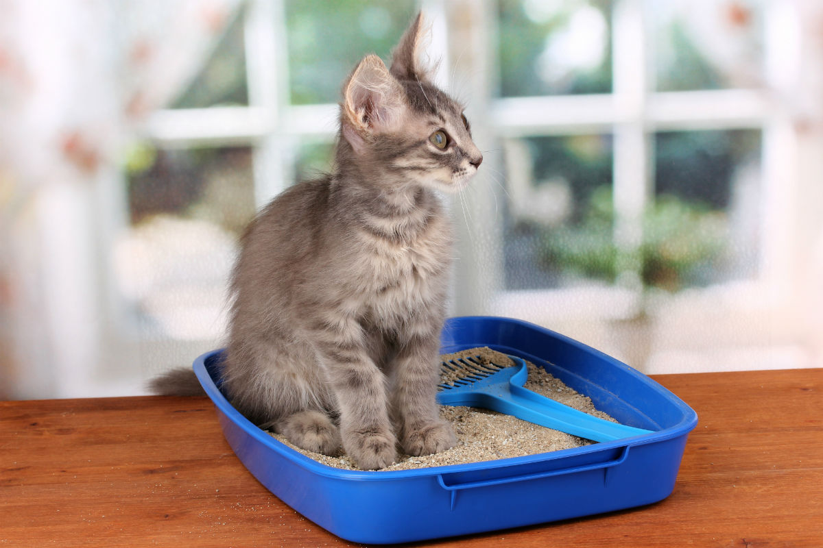 How to wean a cat to dig the earth in flower pots