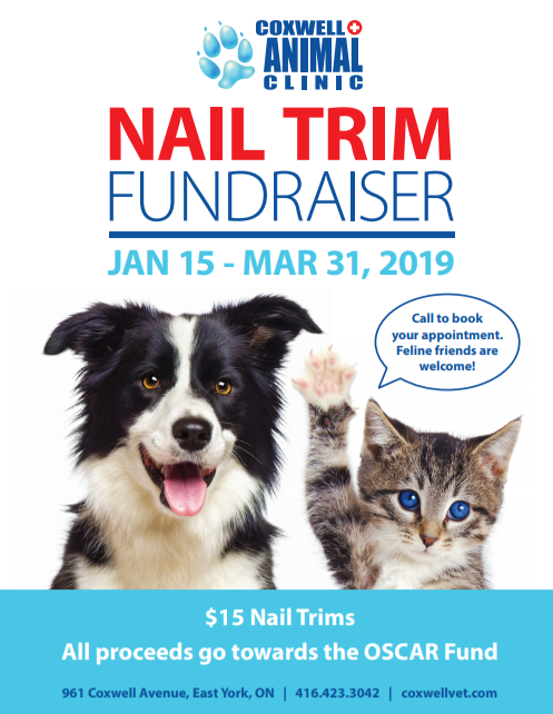 Coxwell Animal Clinic Nail Trim Fundraiser January to March 2019 poster