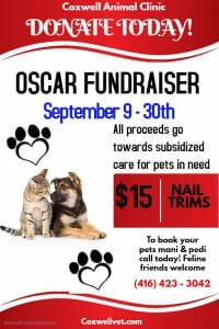 Coxwell Animal Clinic OSCAR Fundraiser September 2019 poster